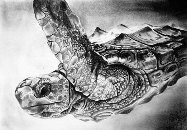 turtle_charcoal